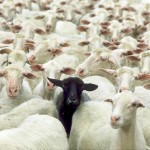 Ko ovce obmolknejo 150x150 - Ko ovce obmolknejo (sobotna kolumna)
